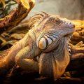 西野七瀬がアナザースカイでパリに!爬虫類大好きっ子がなぜアイドルに?