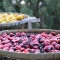 竹内順平(立ち喰い梅干し屋。)がマツコの知らない世界に!梅干しの購入方法。